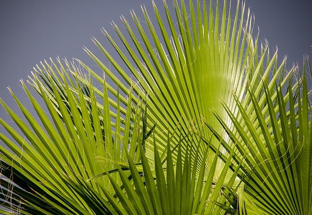 Palmzweige, Palm Twigs